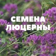 Объявление Семена люцерны на посев в Краснодарском крае