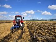 Объявление Сдам в аренду 1120 га земли сельхозназначения в Алтайском крае в Алтайском крае