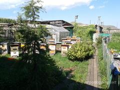 Объявление Пчелосемьи, мёд в Республике Хакасия