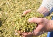 Объявление Силос кукурузный в Алтайском крае
