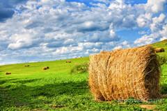 Продаю Продам сено. Урожай 2021 года. в Алтайском крае