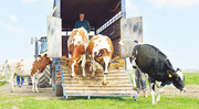 Объявление Услуги скотовоза: КРС, свиньи, лошади, мрс в Новосибирской области