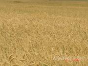 Объявление Продаю сельскохозяйственные объекты в Ставропольском крае