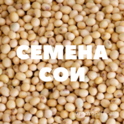Объявление Семена сои в Краснодарском крае
