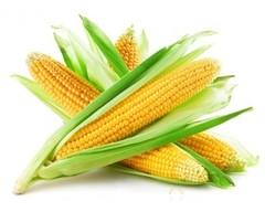 Объявление Реализуем Кукурузу 1, 2 класса в Республике Татарстан