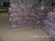 Объявление Продаем картофель оптом белые, круглые сорта 50+ в Саратовской области