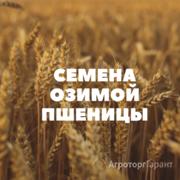 Объявление Семена озимой пшеницы на посев в Краснодарском крае