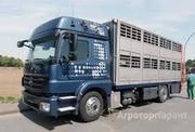 Объявление Перевозка скота, животных на «Вольво» в Алтайском крае