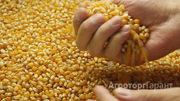 Объявление Кукуруза в Республике Адыгее