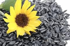 Объявление Закупаем семена подсолнечника в Ульяновской области