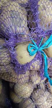 Картофель крымский калиброванный оптом от КФХ