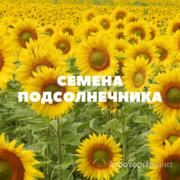 Объявление Семена подсолнечника на посев в Краснодарском крае