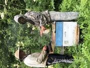 Объявление Продаю мёд с личной пасеки в Алтайском крае