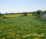 Объявление Продается земля сельхозназначения в Алтайском крае