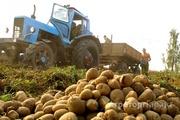 Объявление Работа тракториста в Алтайском крае