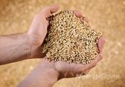 Объявление Купим пшеницу, овес, ячмень, горох в Алтайском крае