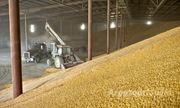 Объявление Куплю пшеницу в Республике Адыгее