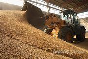 Объявление Сдам склады под хранение и переработку зерновых в Алтайском крае
