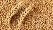 Объявление Пшеница 3 класса в Краснодарском крае