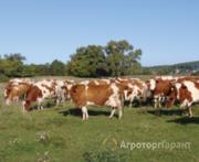 Объявление КФХ действующая ферма в Саратовской области