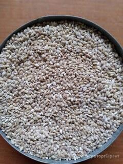Объявление Продам крупу ячневую, перловую, пшеничную от производителя в Омской области