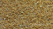 Объявление Требуется транспорт для перевозки пшеницы в Воронежской области