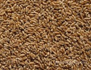 Объявление Пшеница 4 класса в Республике Крым