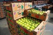 Объявление Яблоки оптом  от КФХ  5.5+ до 7.5+  цена от 30р/кг. в Краснодарском крае