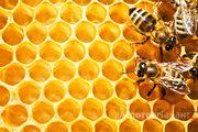 Объявление Алтайский мёд в Алтайском крае