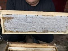 Объявление Продаю башкирский липовый лесной мёд . в Свердловской области