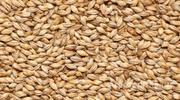 Объявление Пшеница класса Фураж в Республике Адыгее