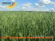 Объявление Семена овса ярового в Воронежской области