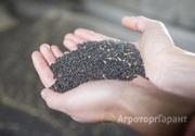 Объявление Рапс нового урожая в Алтайском крае