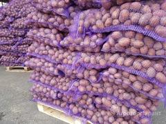 Объявление Картофель оптом в Брянской области