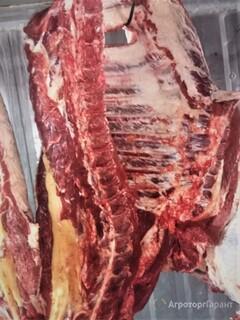 Объявление мясо говядина в Пензенской области