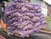 Объявление Картофель оптом 5+ от производителя 9,5 р/кг в Нижегородской области