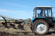 Объявление Услуги трактора Т-40 и МТЗ-82 в Алтайском крае