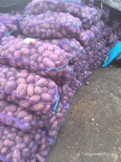 Объявление Отличный картофель от производителя в Тульской области