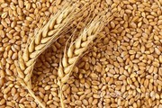 Объявление Продам пшеницу 3-й класс, 11,5 Тыс Тн, по 10,5 руб. в Краснодарском крае
