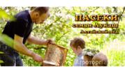 Объявление Алтайский горный мед в Алтайском крае