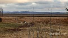 Объявление Земельный участок сельхозназначения с домовладением в Алтайском крае