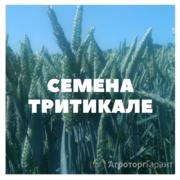 Объявление Семена тритикале в Краснодарском крае
