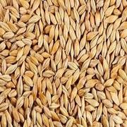 Объявление Пшеница класса фураж в Республике Крым