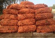 Объявление Морковь оптом в Алтайском крае