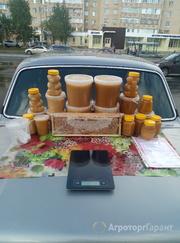 Объявление Мёд со своей пасеки в Алтайском крае