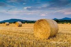 Объявление Продам сено в Алтайском крае