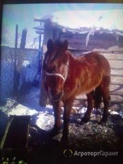 Объявление Лошадь в Алтайском крае