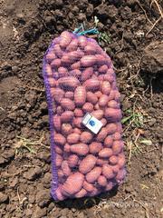 Объявление Картофель калиброванный оптом от КФХ в Республике Крым