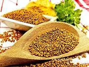 Объявление Семена горчицы сарептской Ника в Краснодарском крае