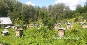 Объявление Таежный мед с личной пасеки в Алтайском крае